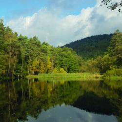 kleiner See in heimatlicher Natur